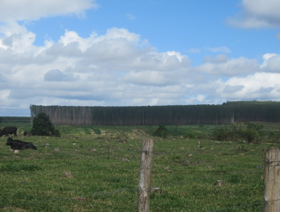 forestfieldtrip