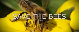 bees-600x250